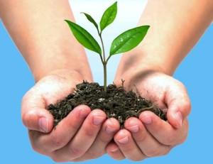 cuidamos-el-medioambiente